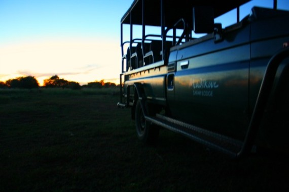 safari36