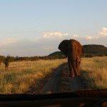 safari50